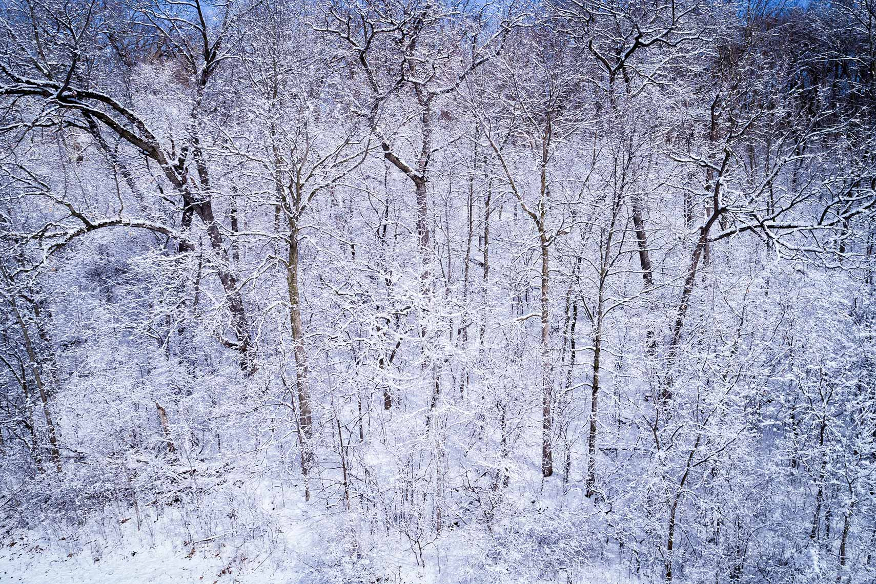 DJI_0005EarlySpringSnow-Covered-TreesWEB