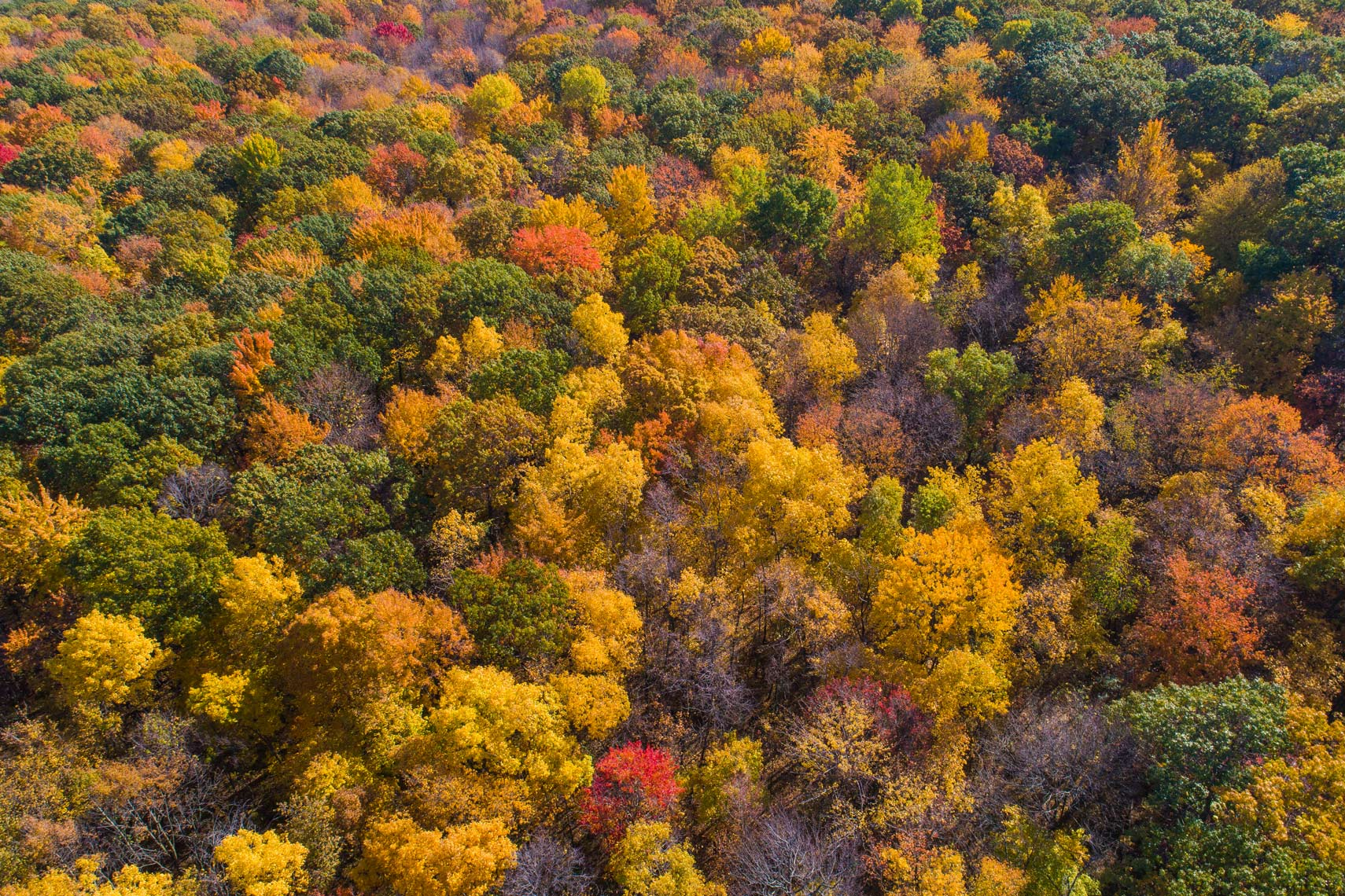 DJI_0006Fall-Colors