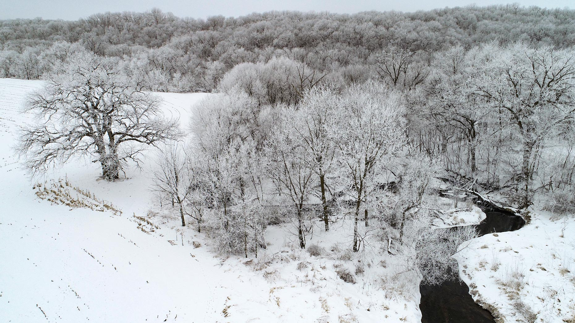 DJI_0055Winter.Tree.StreamWEB